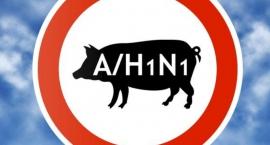 swinska-grypa-w-powiecie