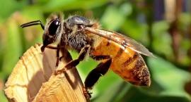 za-pszczoly-za-kratki