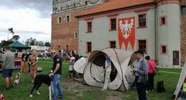 na-terenie-zamku-golubskiego-odbywa-sie-xlix-torunska-wystawa-psow-rasowych